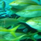 elwoodaqua Avatar image