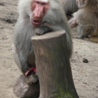 manneke64 Avatar image