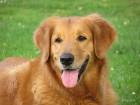 doglover6's profile image
