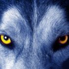 flesh4hotfun's profile image